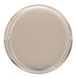 Münzen Kapsel Durchmesser 101 mm für (z. B.) 1 Kilogramm - 1 kg - Kookaburra / Koala / Lunar in Silber